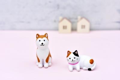 我が家の可愛い家族達♡(犬編)